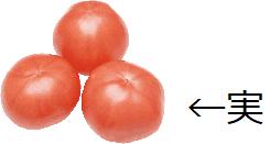 トマト実.png