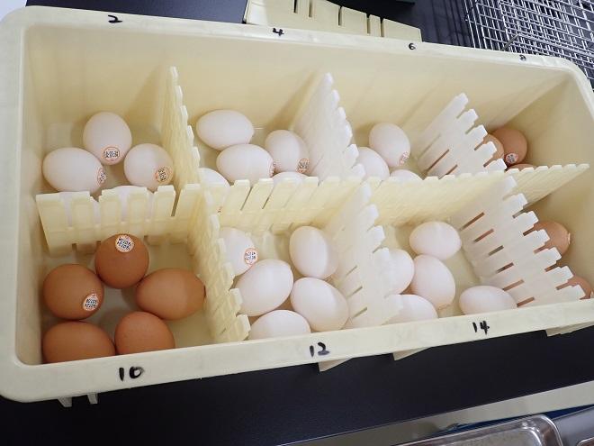 食中毒菌検査では、中身を検査する前に殻をアルコールに浸け、殺菌します。